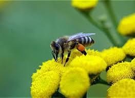 méhek1